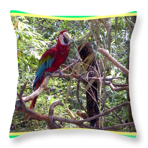 Artistic Throw Pillow featuring the photograph Artistic Wild Hawaiian Parrot by Joseph Baril