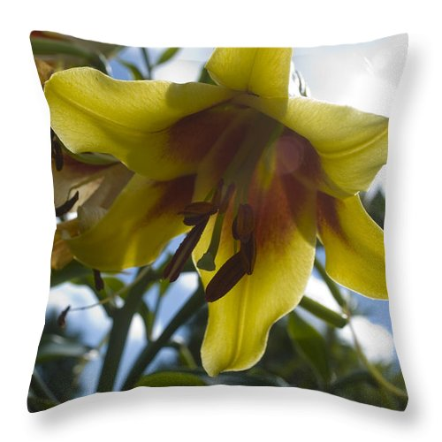 Flower Throw Pillow featuring the photograph Asiatic Lily by Breanna Calkins