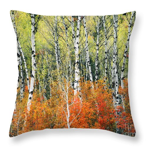 Landscape Throw Pillow featuring the photograph Aspen And Maple Trees In Autumn by Mark Sunderland