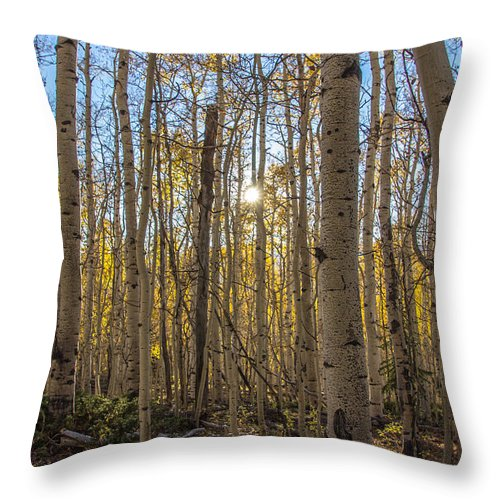 Trees Throw Pillow featuring the photograph Aspen Forrest by Dillen Erb