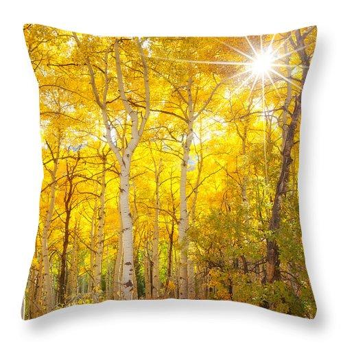 Aspens Throw Pillow featuring the photograph Aspen Morning by Darren White