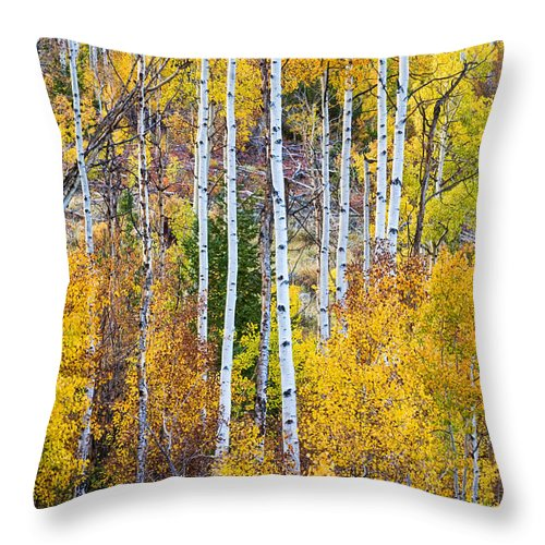 Autumn Throw Pillow featuring the photograph Aspen Tree Magic by James BO Insogna
