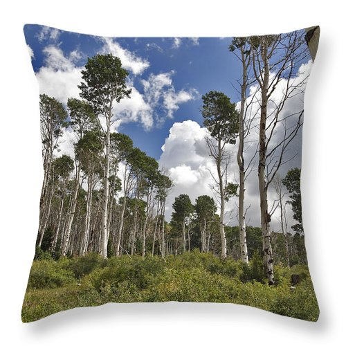 3scape Photos Throw Pillow featuring the photograph Aspen Grove by Adam Romanowicz