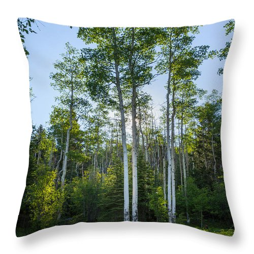 Aspen Throw Pillow featuring the photograph Aspens At Sunrise 1 - Santa Fe New Mexico by Brian Harig