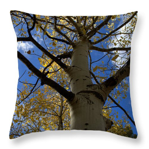 Aspen Throw Pillow featuring the photograph Aspens In Fall by Anjanette Douglas