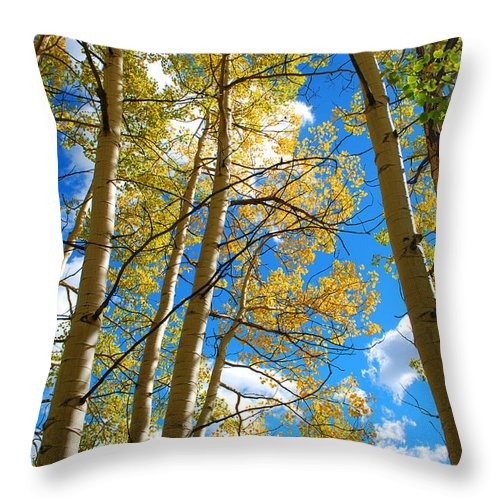 Aspen Throw Pillow featuring the photograph Aspens In The Clouds by Breanna Calkins