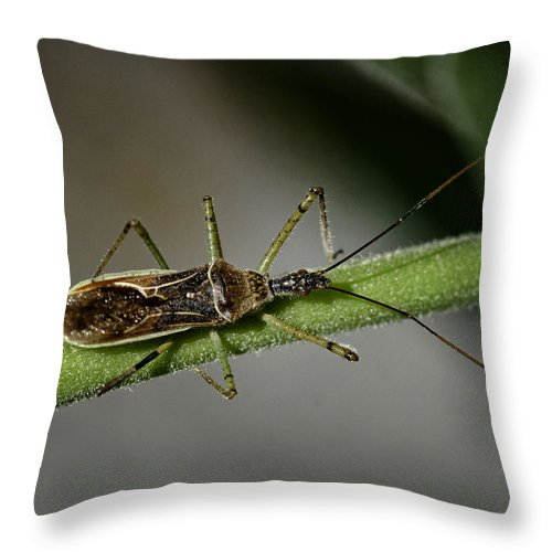 Assassin Bug Throw Pillow featuring the photograph Assassin Bug by Betty Depee