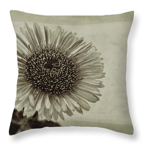 Toned Aster Throw Pillow featuring the photograph Aster With Textures by John Edwards
