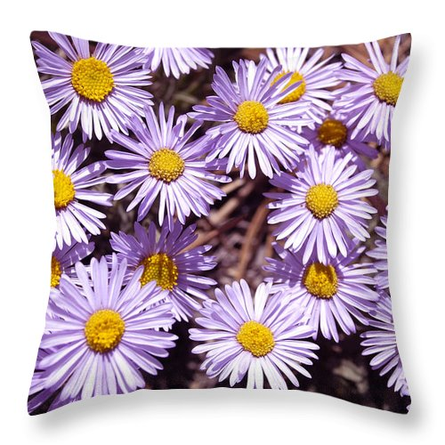 Asters Throw Pillow featuring the photograph Asters by Dennis Rundlett