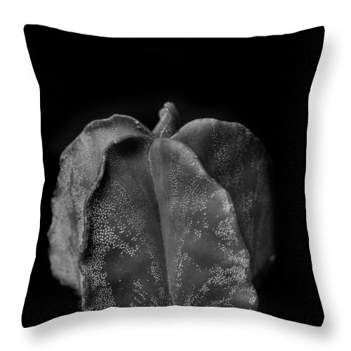 Cactus Throw Pillow featuring the photograph Astrophytum Cactus by Nathan Abbott