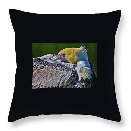 Pelican Throw Pillow featuring the photograph At Rest 2 by HH Photography of Florida