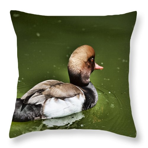 Duck Throw Pillow featuring the photograph At The Duck Pond by Douglas Barnard