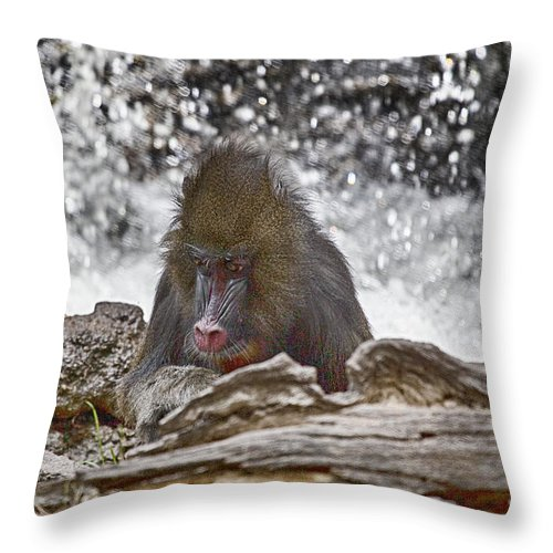 Mandrill Throw Pillow featuring the photograph At The Edge Of The Waterfall by Douglas Barnard