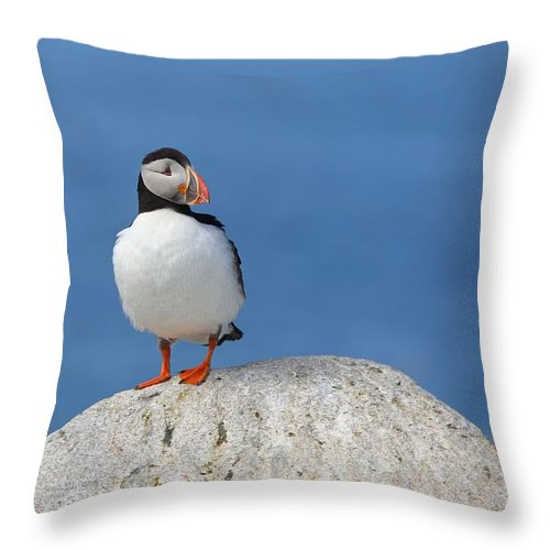 Atlantic Puffin Throw Pillow featuring the photograph Atlantic Puffin by Daniel Behm