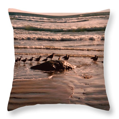 Sea Gulls Throw Pillow featuring the photograph Audience by Andrea Goodrich
