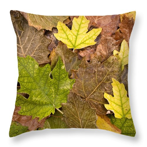 Nobody Throw Pillow featuring the photograph Autumm Is Coming 2 by Pedro Cardona Llambias