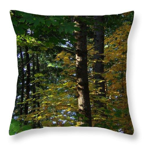 Bloom Throw Pillow featuring the photograph Autumn 10 by J D Owen