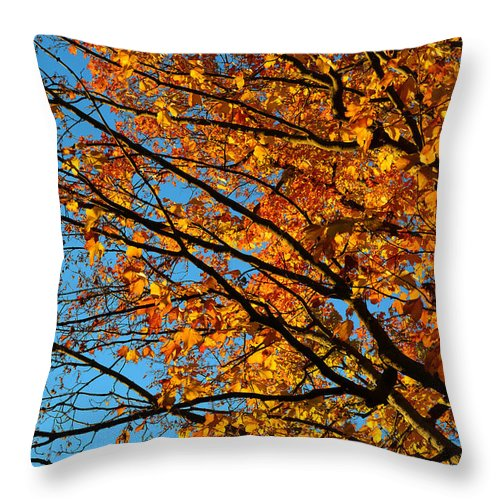 Landscape Throw Pillow featuring the photograph Autumn 2013 by Dragan Kudjerski