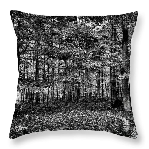 Adirondack's Throw Pillow featuring the photograph Autumn At Mccauley Mountain IIi by David Patterson