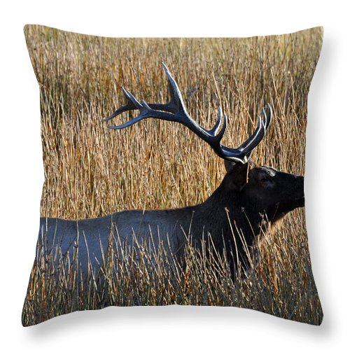 Elk Throw Pillow featuring the photograph Autumn Bull Elk In Yellowstone National Park by Bruce Gourley