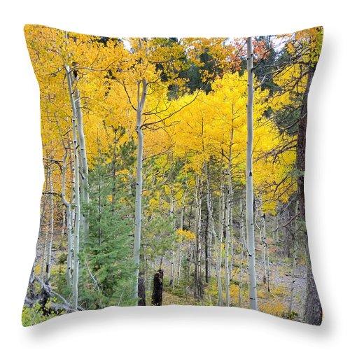 Aspens Throw Pillow featuring the photograph Autumn Colorado-1 by Dennis Rundlett