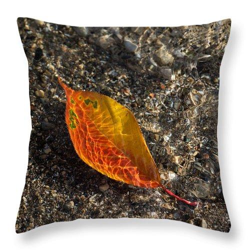 Georgia Mizuleva Throw Pillow featuring the photograph Autumn Colors And Playful Sunlight Patterns - Cherry Leaf by Georgia Mizuleva