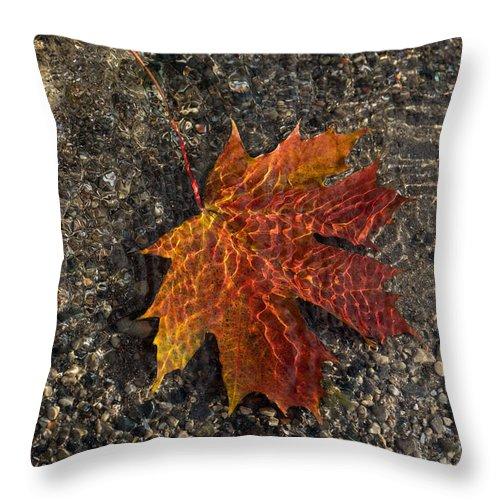 Georgia Mizuleva Throw Pillow featuring the photograph Autumn Colors And Playful Sunlight Patterns - Maple Leaf by Georgia Mizuleva