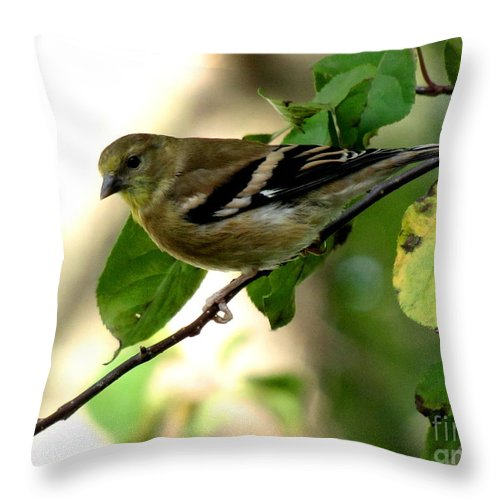 Goldfinch Throw Pillow featuring the photograph Autumn Colors by Marilyn Smith