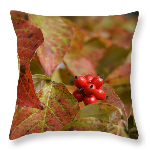 Dogwood Throw Pillow featuring the photograph Autumn Dogwood Berries by MM Anderson