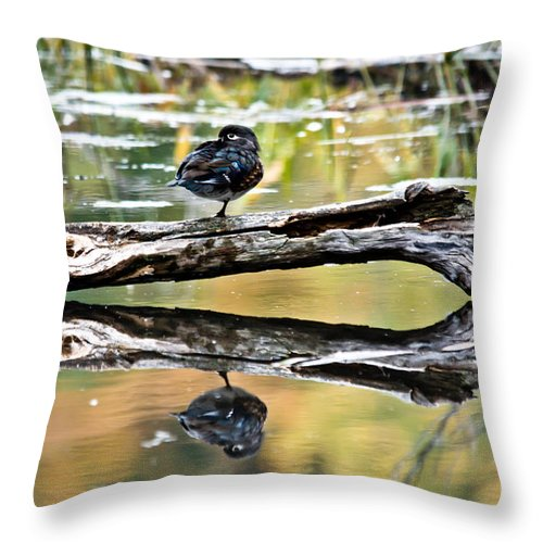 Throw Pillow featuring the photograph Autumn Duck Reflections by Cheryl Baxter