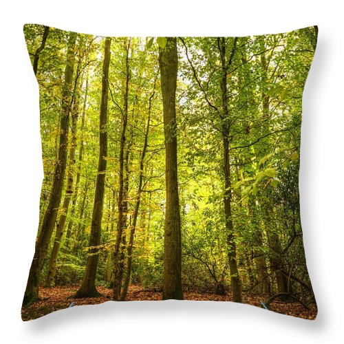 Magic Throw Pillow featuring the photograph Autumn Fall Forest Landscape Magic Book Pages by Matthew Gibson