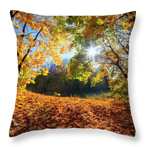Autumn Throw Pillow featuring the photograph Autumn Fall Landscape In Forest by Michal Bednarek