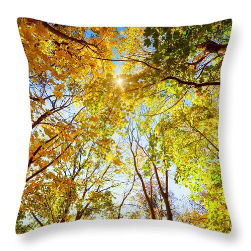 Autumn Throw Pillow featuring the photograph Autumn Fall Trees by Michal Bednarek