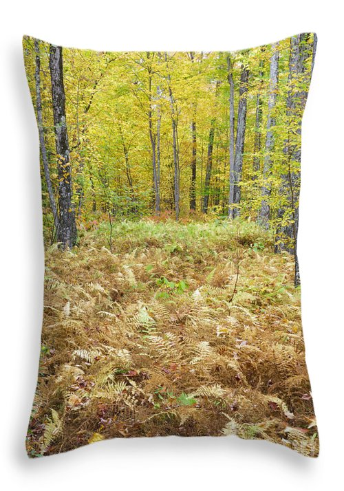 Autumn Throw Pillow featuring the photograph Autumn Forest - White Mountains New Hampshire by Erin Paul Donovan
