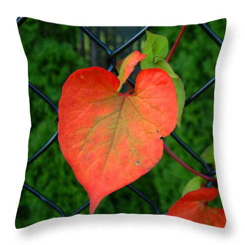Vine Throw Pillow featuring the photograph Autumn In July by RC DeWinter