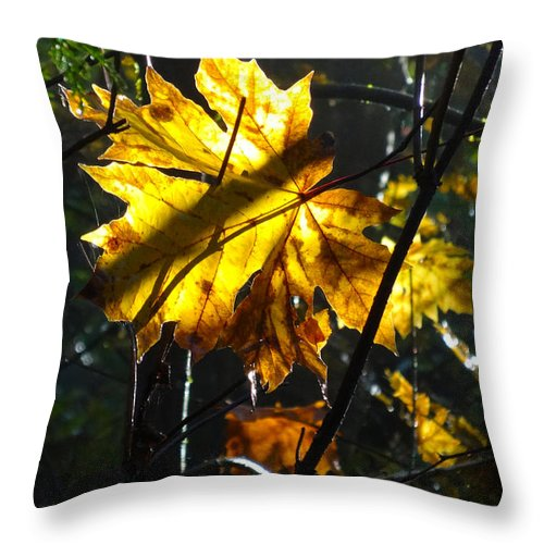 Autumn Throw Pillow featuring the photograph Autumn Leaf by Lesley DeHaan