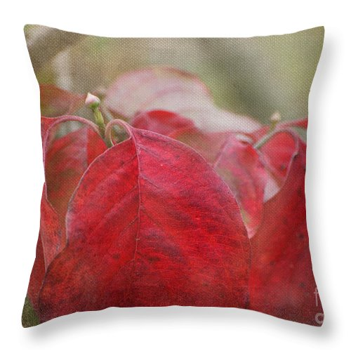 Nature Throw Pillow featuring the photograph Autumn Leaves Blank Greeting Card by Debbie Portwood