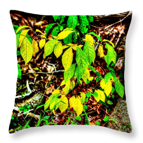 Leaves Throw Pillow featuring the photograph Autumn Leaves In Green And Yellow by Mother Nature