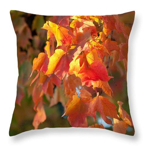 Autumn Throw Pillow featuring the photograph Autumn by Sebastian Musial