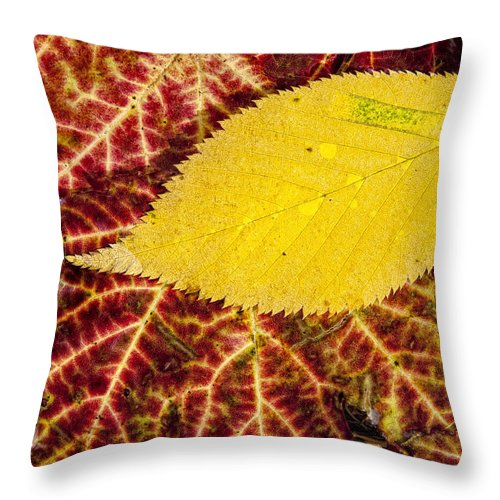 Leaf Throw Pillow featuring the photograph Autumn Yellow by Claudia Kuhn