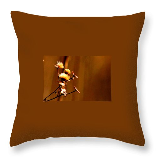 Nature Throw Pillow featuring the photograph Autumn's Moment by Bruce Patrick Smith