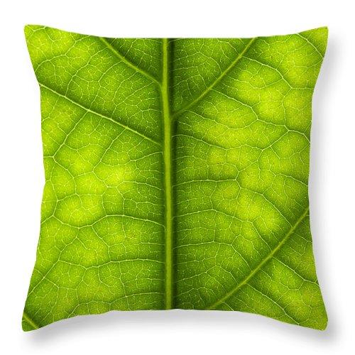 Avocado Leaf Throw Pillow featuring the photograph Avocado Leaf by Gary Eason