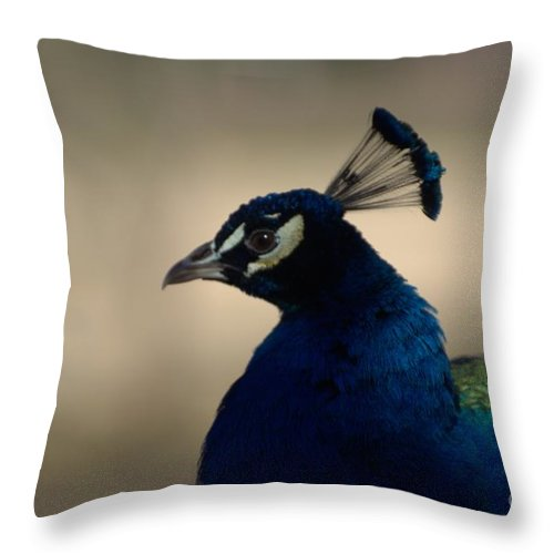 Bird Throw Pillow featuring the photograph Awesome Peacock by Donna Brown
