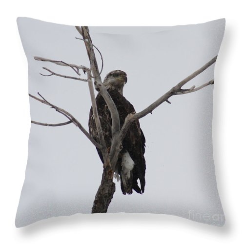 Bald Eagle Throw Pillow featuring the photograph Baby Bald Eagle by Brandi Maher