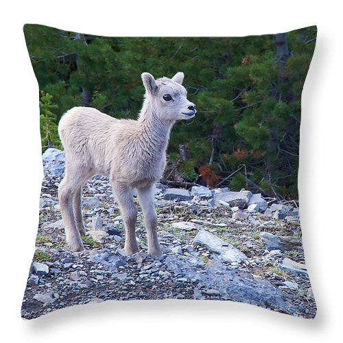 Big Horn Sheep Throw Pillow featuring the photograph Baby Big Horn Sheep by Stuart Litoff