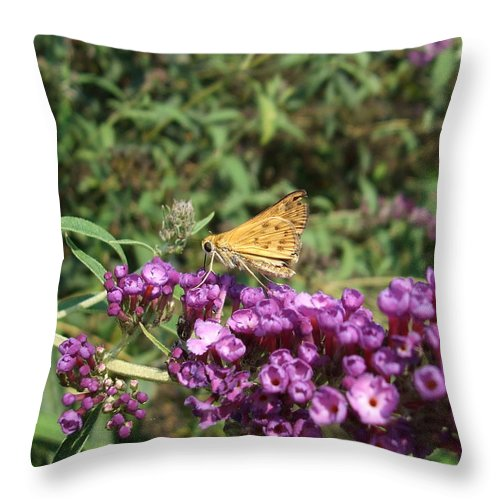 Butterfly Throw Pillow featuring the photograph Baby Butterfly by Lisa Wormell