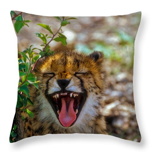 Animals Throw Pillow featuring the photograph Baby Cheetah by Mauro Celotti