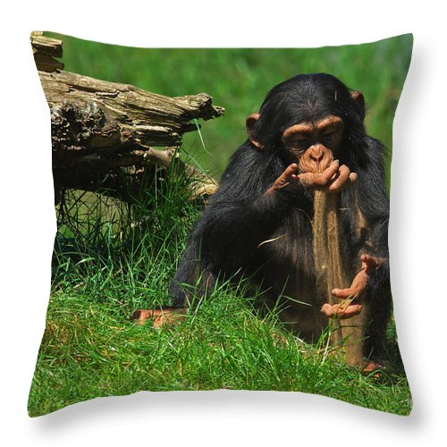 baby chimp playing with sand throw pillow for salenick biemans