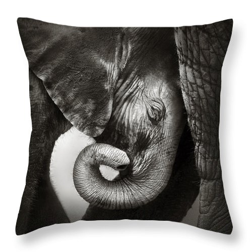Elephant Throw Pillow featuring the photograph Baby elephant seeking comfort by Johan Swanepoel