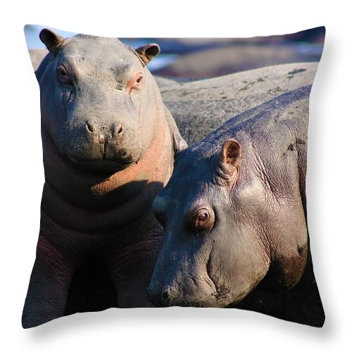 Two Hippopotamus Throw Pillow featuring the photograph Baby Hippo by Amanda Stadther